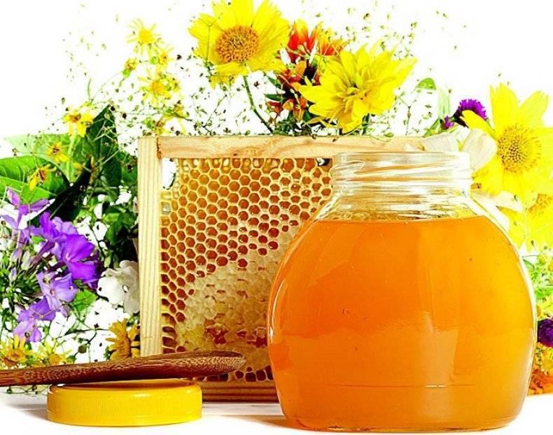 Мед подсолнечника: описание, полезные свойства, применение в народной медицине