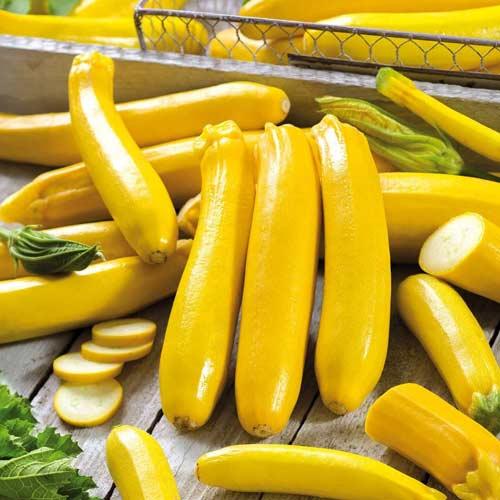 Желтоплодные кабачки: правила выбора сорта и особенности выращивания