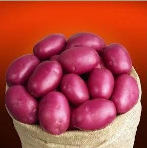 Описание сортов картофеля: гала, удача, скарлет, жуковский, тулеевский