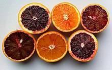Характеристика красного мандарина