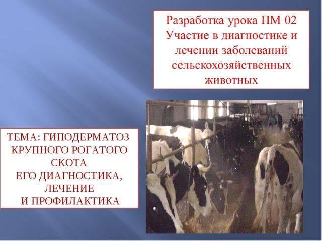 Нодулярный дерматит крупного рогатого скота: признаки, диагноз, профилактика и меры борьбы.    ветеринарная служба владимирской области