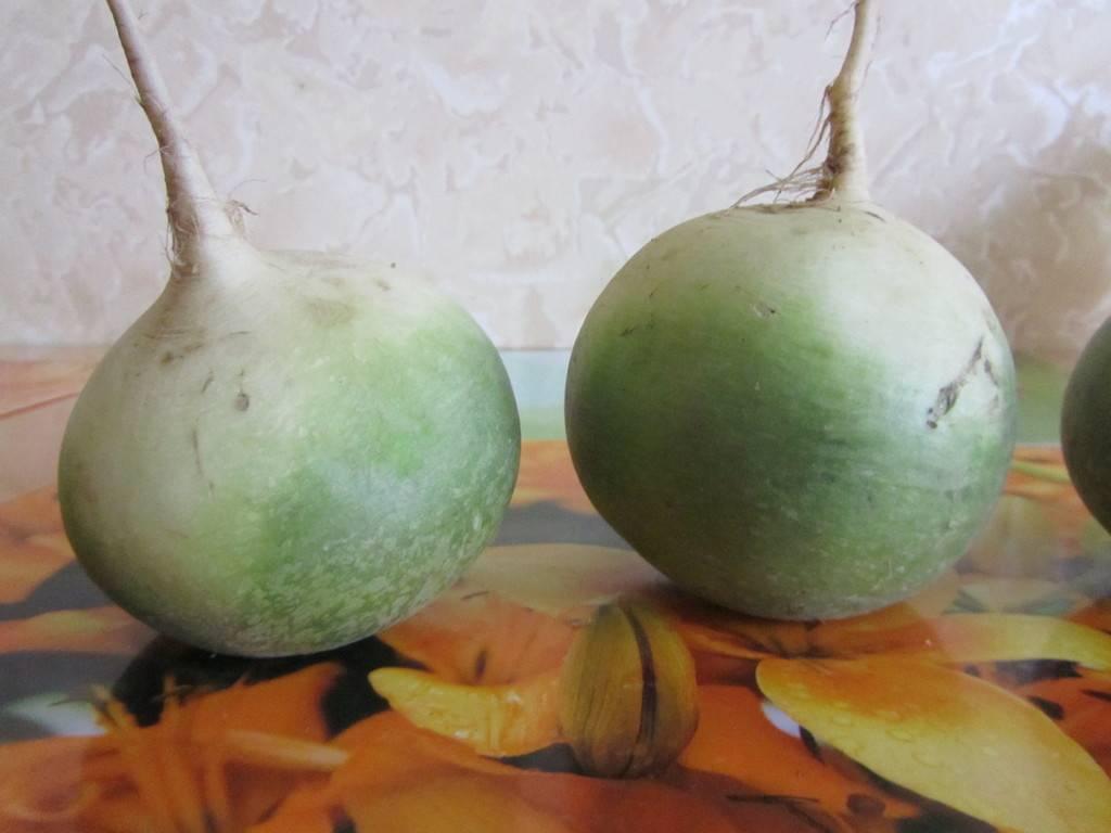 Разница двух корнеплодов: чем отличается репа от редьки?