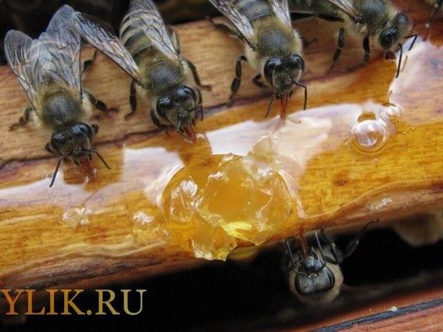 Кормушка для пчел своими руками