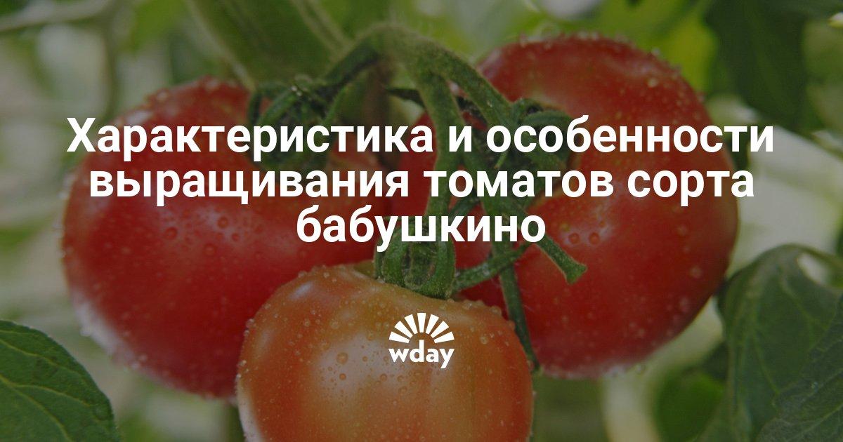 Описание сорта и особенности ухода томата «бабушкина гордость»