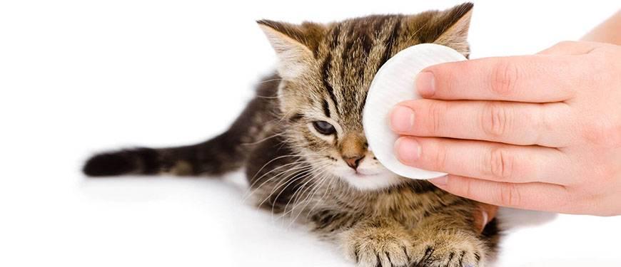 Хламидиоз у животных: симптомы и лечение