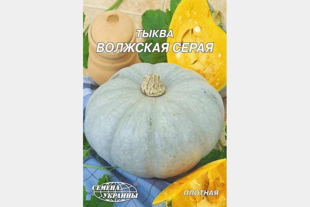 Крупноплодный и среднеспелый сорт тыквы «волжская серая»: правила агротехники и советы по выращиванию