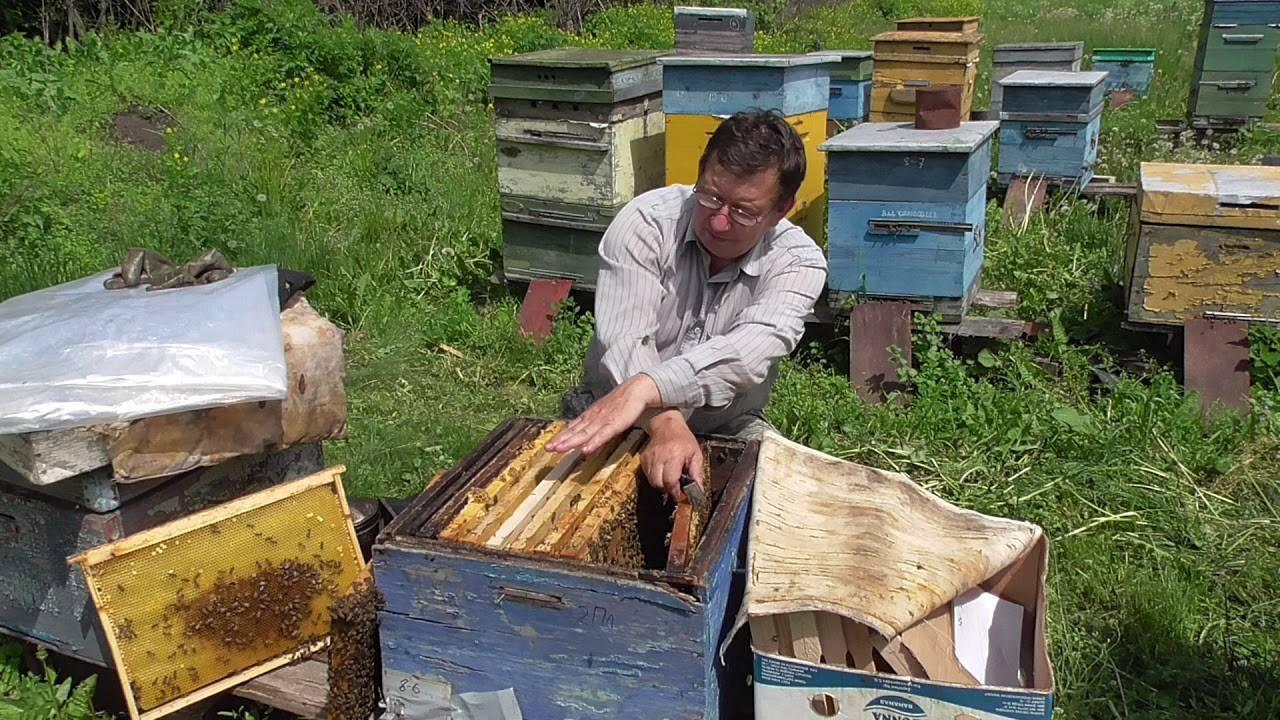 Осенний уход за пчелами